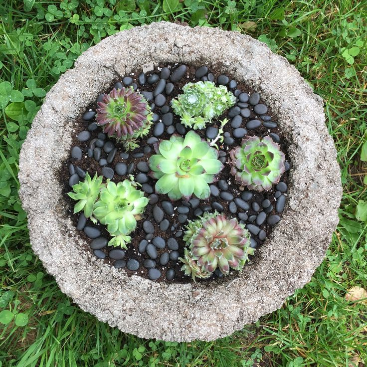 Tufa Garden Container And Succulents.