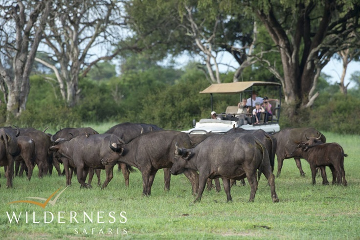 Out in the wilderness with Wilderness Safaris