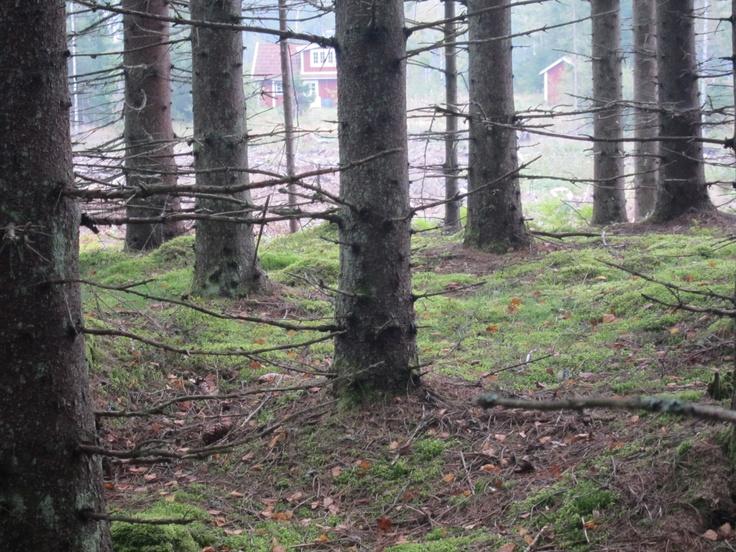 Rävamåla  Copyright ©Katjagry Media 2012