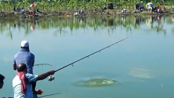 Big Grass Carp Fish Hunting By Kalam