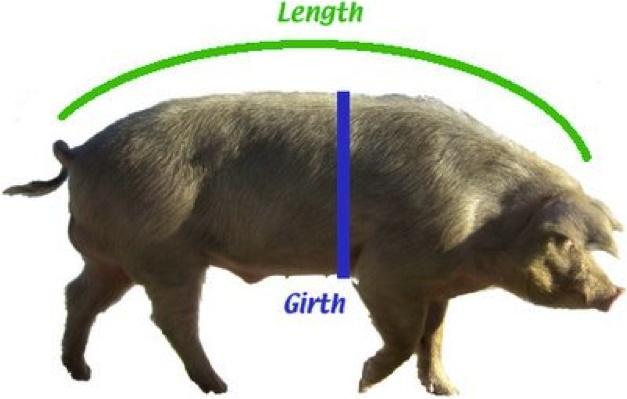 100+ Pig Weight Gain Story – yasminroohi