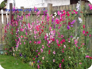 My Mother strung sweet peas much like this so they would climb up the outside of my bedroom window when I was a child. I love sweet peas!