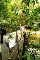 Lacandon, Chiapas, selva lacandona. Lacanja
