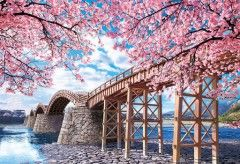 Kintai bridge with cherry blossom