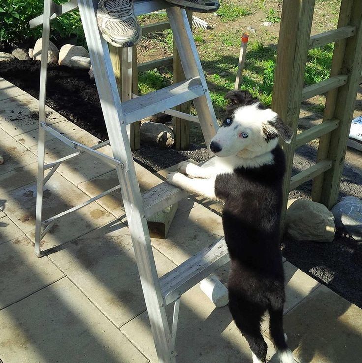 This is Piper holding the ladder while I work on the pergola and arbor.