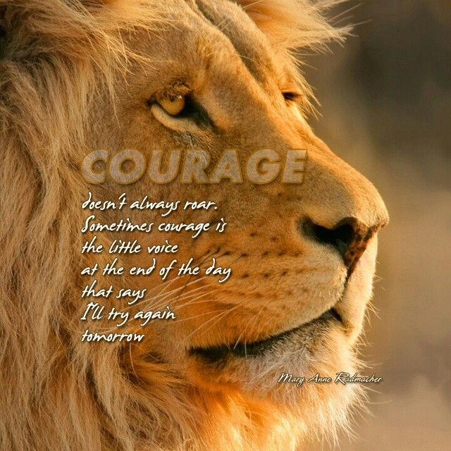 #PicOfTheDay #QuoteOfTheDay #WordsOfWisdom #courage #strength #LionStrong #Leo #lion powerful #love #StrengthOfALion #NeverGiveUp
