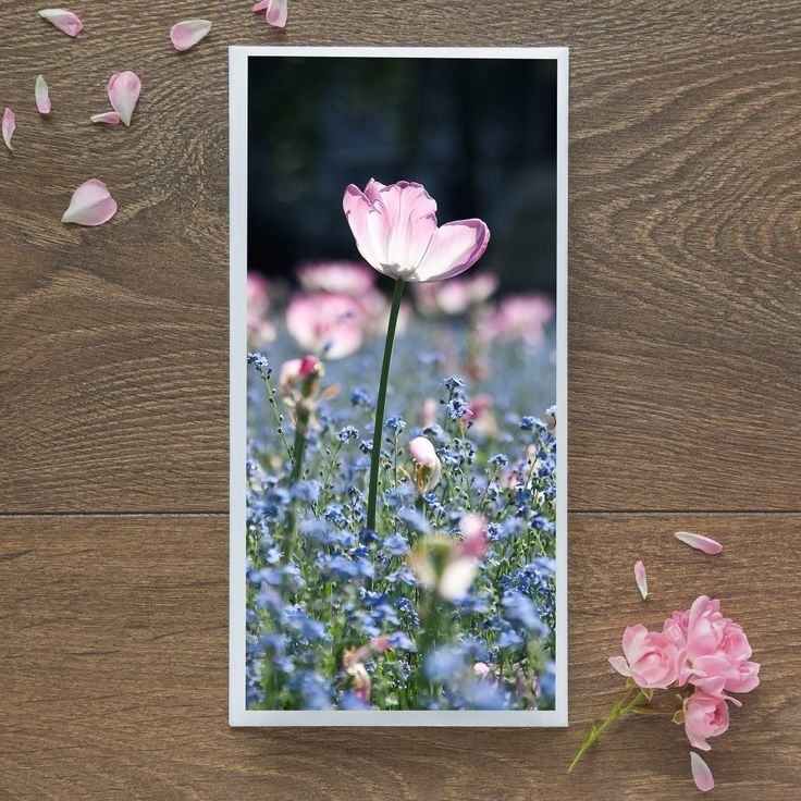 Single Blank Card by landscape photographer Nina K Claridge - Single Tulip