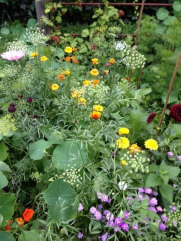 The Higgledy Garden Bed - Nigel Slater