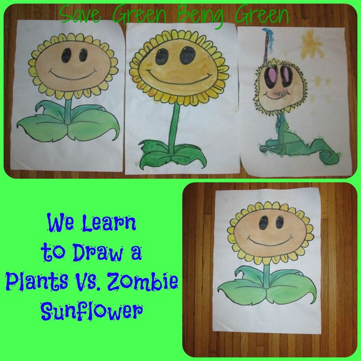 how to draw plants vs zombies sunflower
