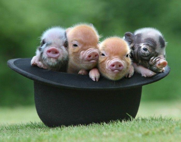 Im Bann Der Tiere Aussergewohnliche Haustiere Bringen Sie Zum Lacheln In 2020 Lustige Tiere Aussergewohnliche Haustiere Tiere
