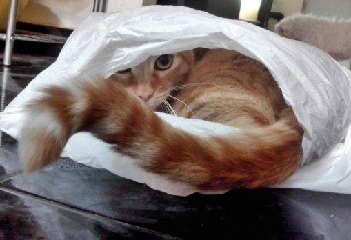 Hidden... Nacho