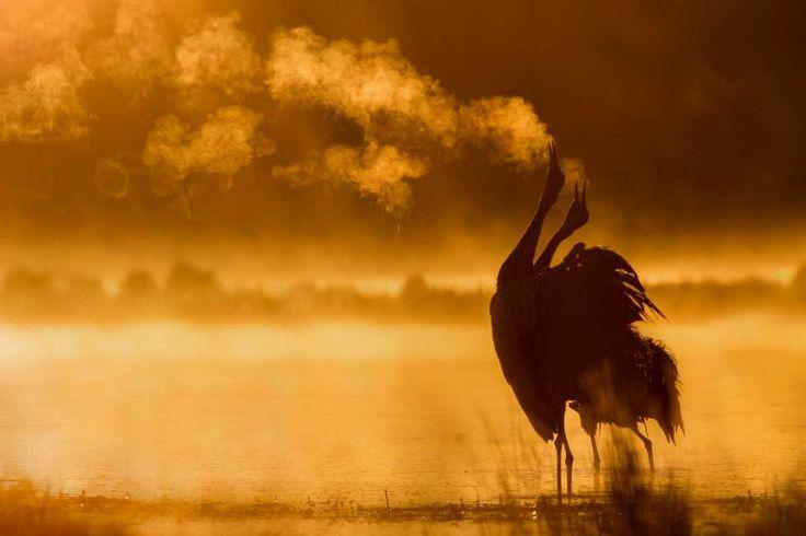 Najpiękniejsze sceny myśliwskie i zdjęcia przyrody w konkursie im. Włodzimierza Puchalskiego