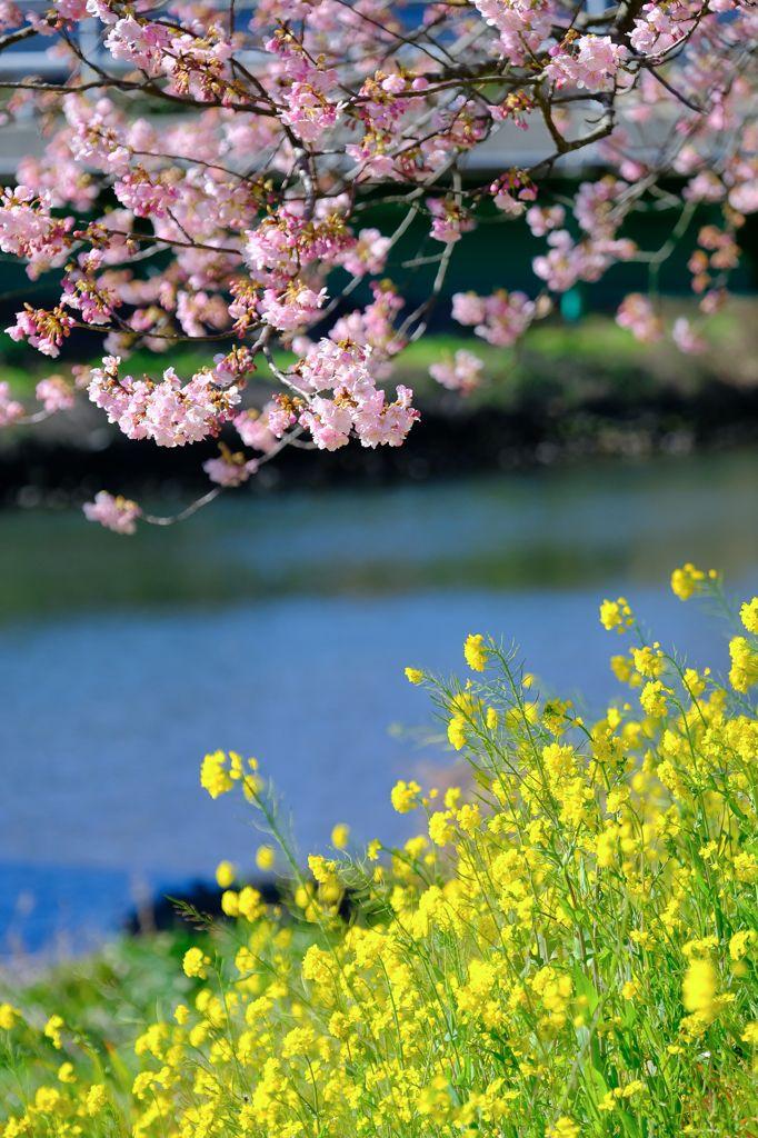 ふたつの春がこんにちわ