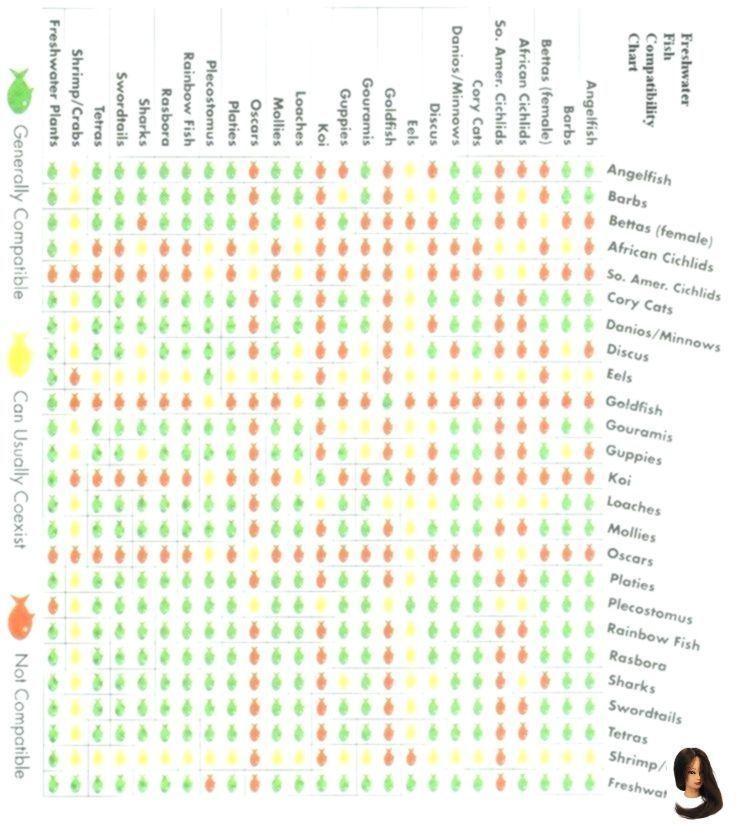 Chart Compatibility Fish Chart Compatibility Fish Fish Compatibility Chart Fish Compatibility C Ch Fish Chart Compatibility Chart Chart