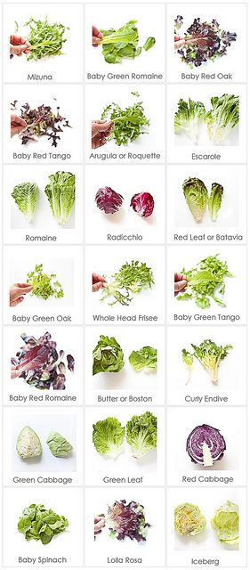 Food Cheat Sheet: Lettuce Varieties & Names -still can grow in Md with cold frame or row covers