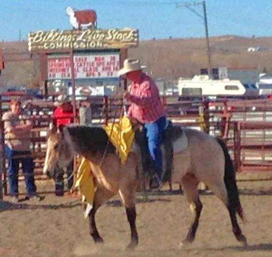 Billings Livestock Commission Monthly Cataloged Horse Sale