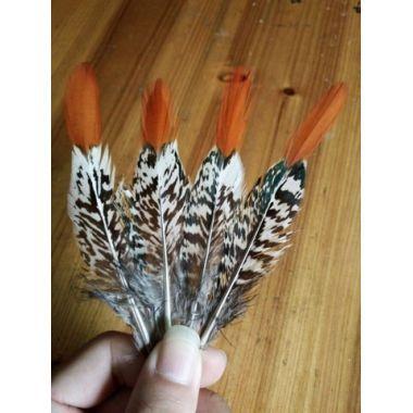 Перья фазана Lady Amherst 10-15 см. От 10 шт.