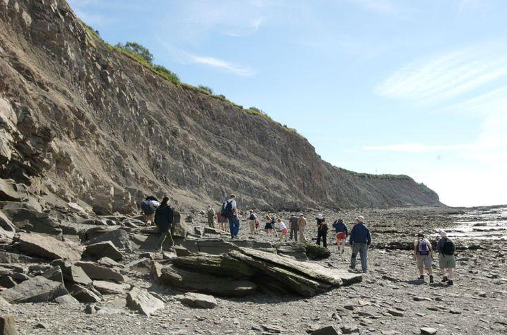 Joggins Fossil Cliffs UNESCO World Heritage Site | Tourism Nova Scotia