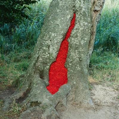 Les 52 meilleures images du tableau nils udo sur pinterest for Poisson rouge artificiel