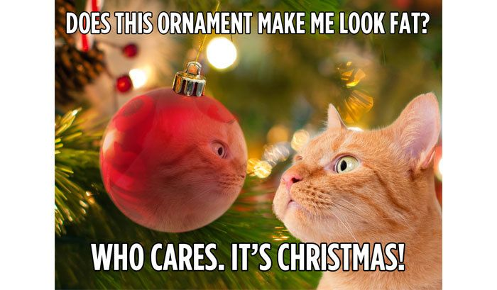 Does this ornament me me look fat? Who cares. It's Christmas! Happy Thoughts from Happy the Cat | Happy the Cat | Hallmark Channel http://www.hallmarkchannel.com/happy/happy-thoughts/    The Nine Lives of Christmas TV Movie. #Happythecat #cathumor #Christmas http://www.hallmarkchannel.com/happy