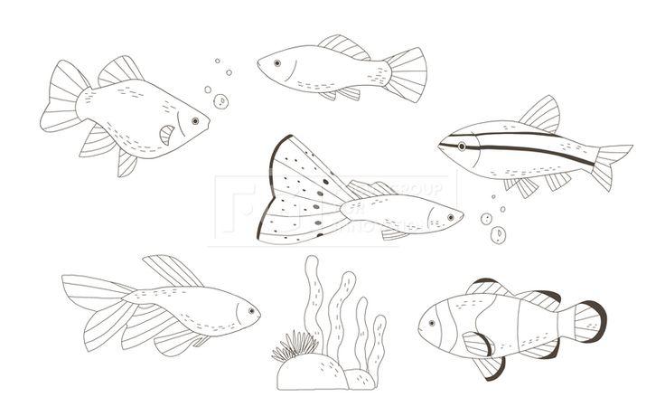 SPAI148, 프리진, 일러스트, SPAI148a, 동물, 에프지아이, 라인, 물고기, 생선, 어류, 애완동물, 반려동물, 구피, 미역, 산호, 열대어, 흰동가리, 일러스트, illust, illustration #유토이미지 #프리진 #utoimage #freegine 19952201