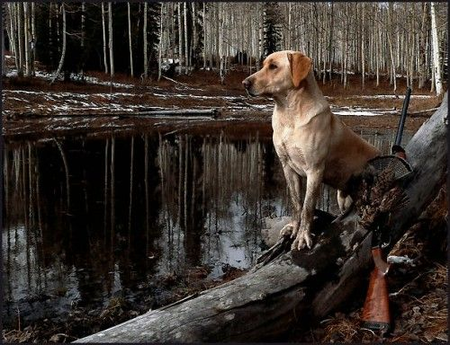 hunting with your best friend
