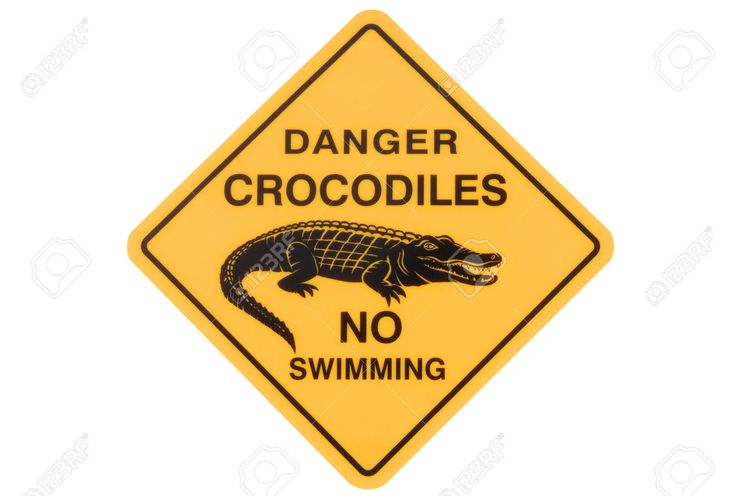 37450695-Australian-crocodile-road-warning-sign-with-no-swimming-isolated-on-a-white-background--Stock-Photo.jpg (1300×877)