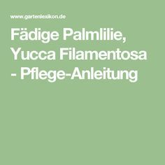 Fädige Palmlilie, Yucca Filamentosa - Pflege-Anleitung