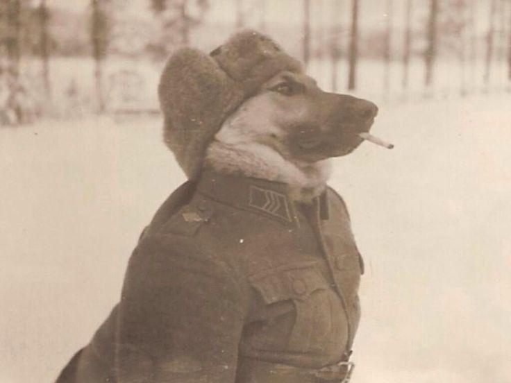 Finsky pes v druhe svetove..