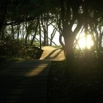 The 10 best hiking trails in Long Island include the David Weld Sanctuary in Nissequogue, the Mashomack Preserve on Shelter Island, and the Seal Halout Hike in Montauk.    http://offmetro.com/ny/2012/02/20/hiking-trails-long-island/
