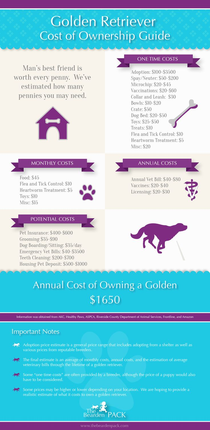 This is our Golden Retriever cost of ownership guide (Infographic).