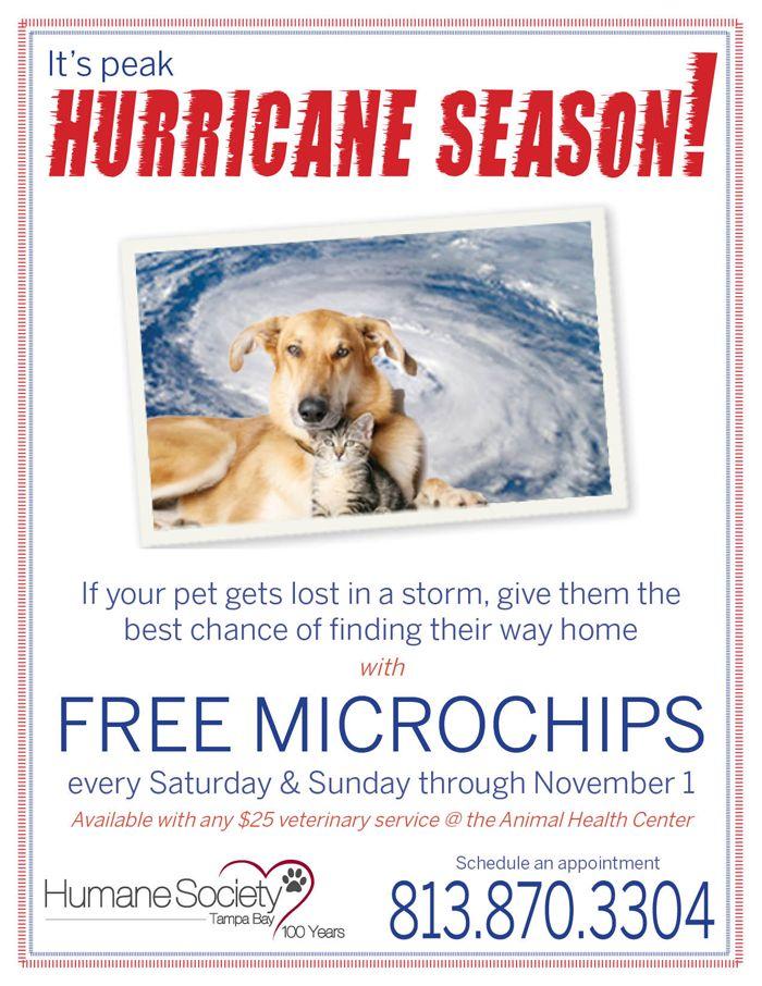 Free Microchips for Peak Hurricane Season at the Tampa Bay