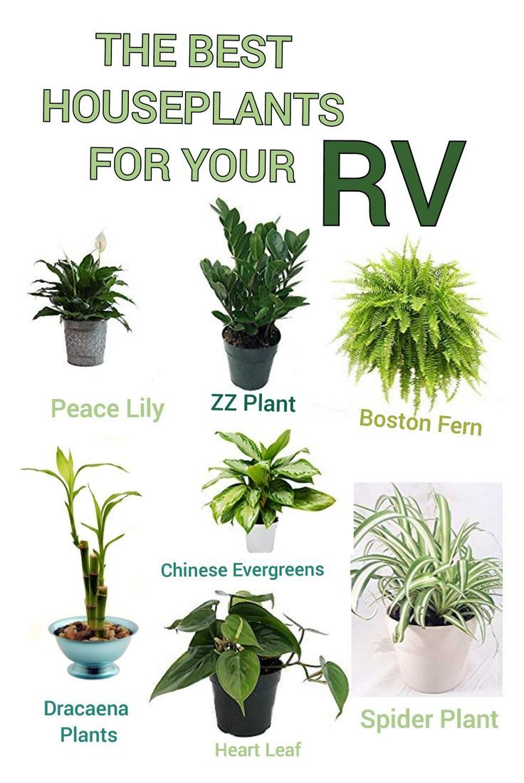 The Best Houseplants For Your Rv In 2020 Houseplants Plants House Plants
