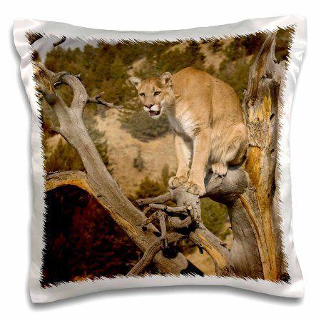 3dRose Puma, Yellowstone NP, Montana - US27 JMC0012 - Joe and Mary Ann McDonald, Pillow Case, 16 by 16-inch