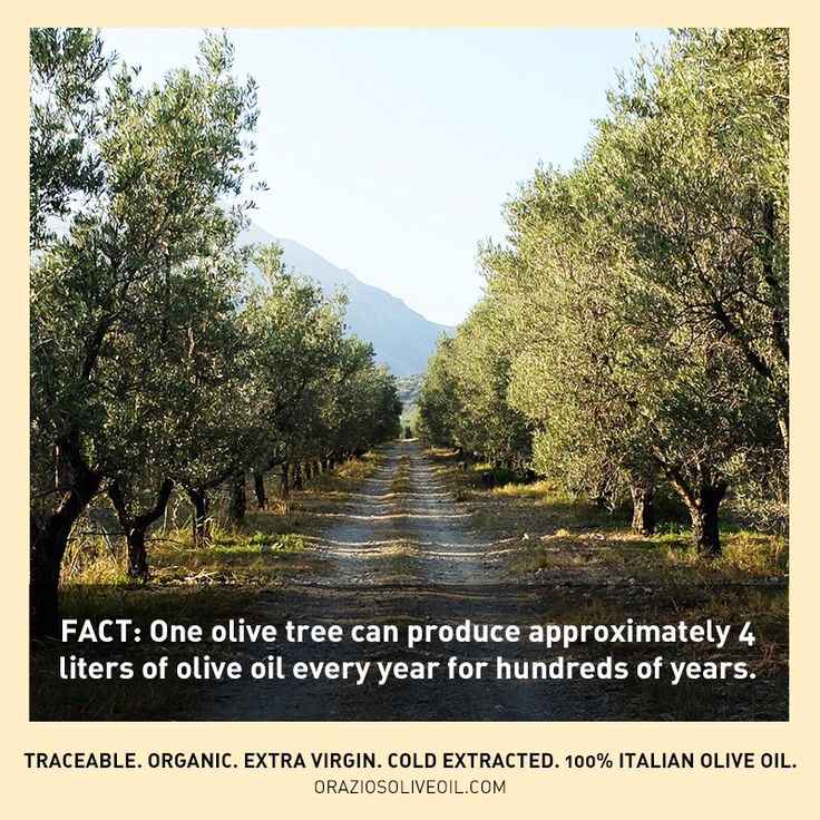 Fact: 1 olive tree can produce approximately 4 liters of olive oil every year for hundreds of years! #oliveoil #oliveoilfacts #evoo #olivetree #oliveharvest