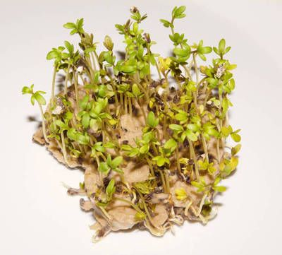 Easy-How to make plantable seed paper step-by-step!!!