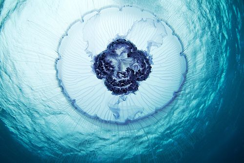under the seaRed Sea, Stunning Photography, Sea Creatures, Underwater Photography, Ocean Creatures, Underwater World, Alexander Semenov, Beautiful Creatures, Jellyfish