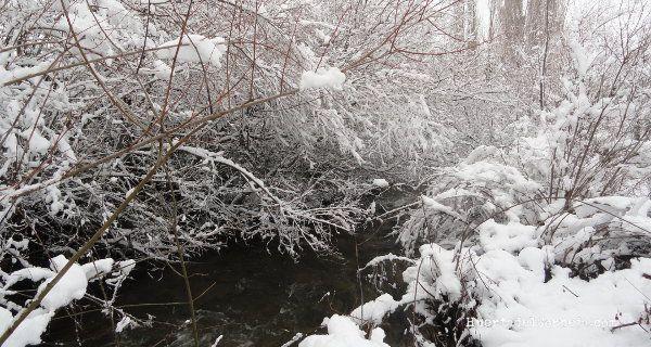 varas en río con nieve
