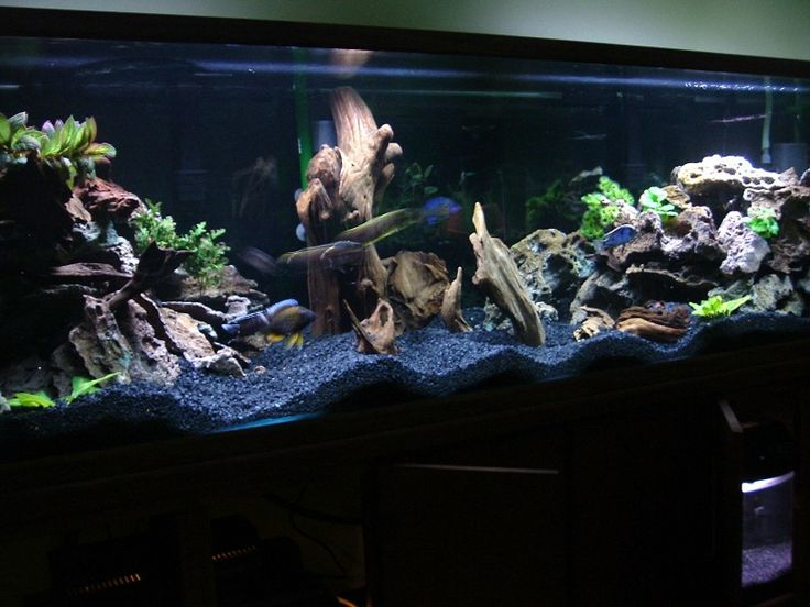 255 best images about trying live plants tank ideas on for Live fish tank