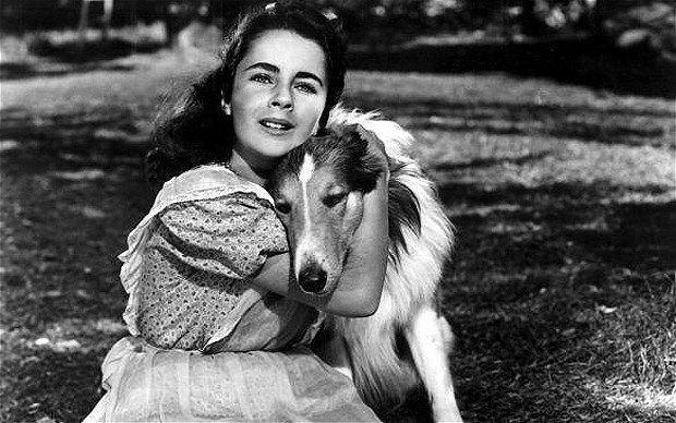 H «Λάσι» ήταν ένα σκυλί ράτσας κόλεϊ, το οποίο πρωταγωνίστησε στην ομώνυμη τηλεοπτική σειρά και αγαπήθηκε από τα παιδιά που την παρακολούθησαν τις περασμένες δεκαετίες.…