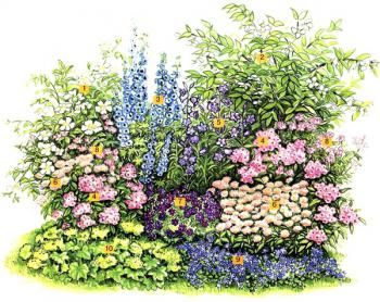(1) куст розы колючейшей (Rosa spinosissima), (2) куст чубушника, или садового жасмина (Philadelphus) 'Belle Etoile'. В качестве солистов выбраны: (3) шпорник (Delphinium), 3 экз., (4) флокс метельчатый (Phlox paniculata), 5 экз.  В группу поддержки вошли: (5) колокольчик персиколистный (Campanula persicifolia), 4 экз., (6) мелколепестник (Erigeron), 5 экз., (7) герань величественная (Geranium magnificum), 4 экз. В роли заполнителей выступают: (8) пиренейская герань Эндресса (Geranium e
