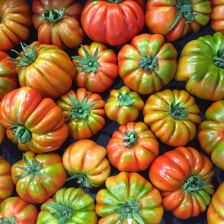 Summer yields the best eating and most diverse range of tomatoes, like this Italian #Vasari variety. It's firm, fleshy and very tasty. Available from your #local greengrocer #inseason #eatwell #red #flavour #sydneymarkets   #tomatoes #summer