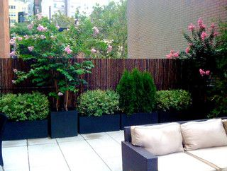 This contemporary NYC roof garden design features potted flowering crape myrtle trees, bamboo, evergreens, variegated willow bushes, and birch trees and black fiberglass pots with bamboo roll fencing and a cozy seating area.