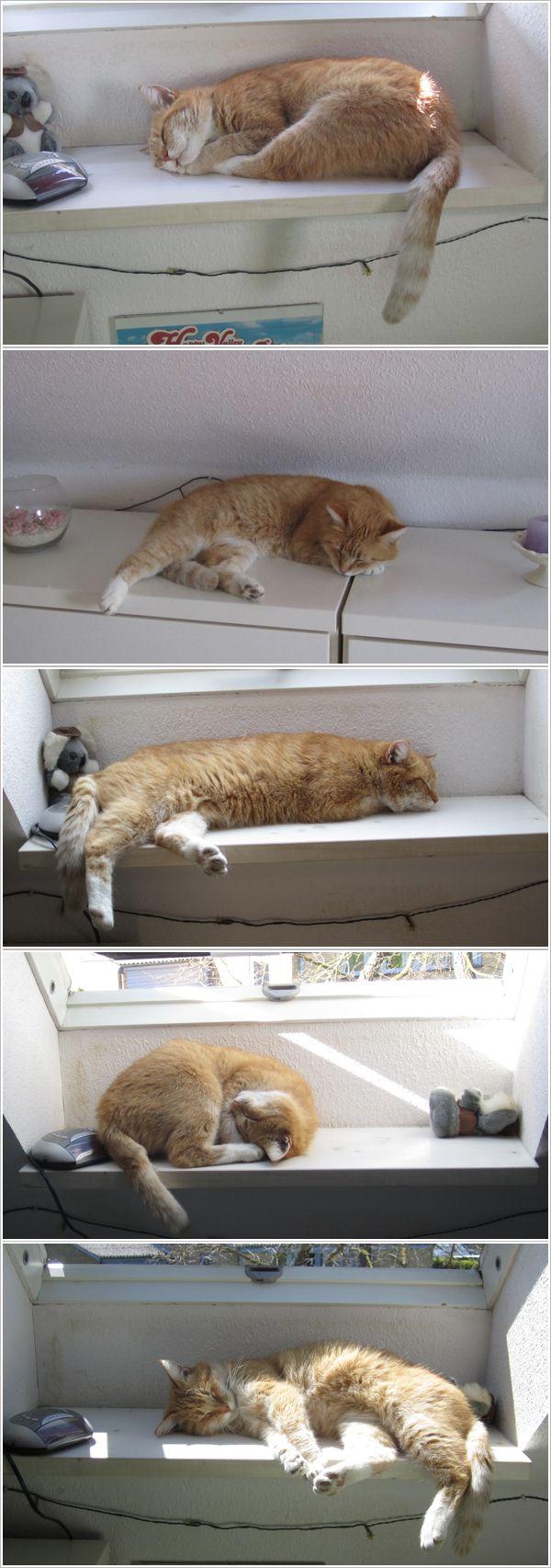 Cat // Kat // Kitten // Cute