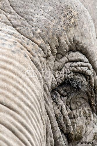 Eye of an #elephant