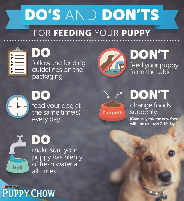 New puppy in the family? Check out our Do's and Don'ts for feeding.