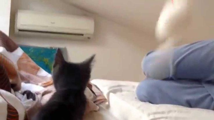 KITTEN PLAYS