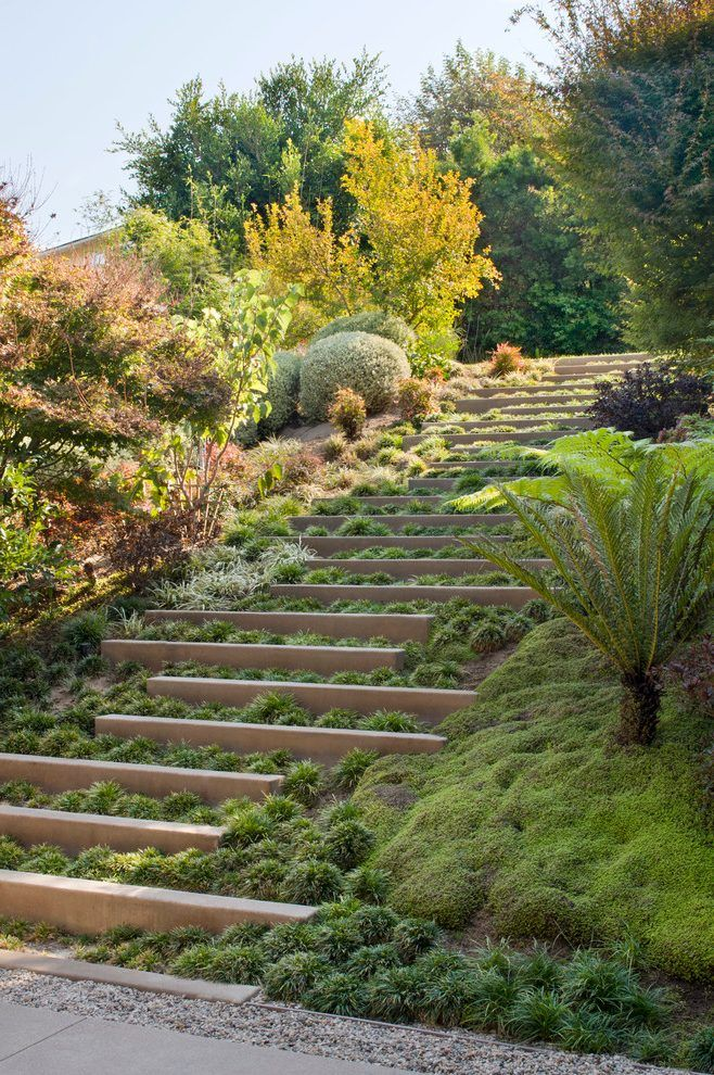 Steep Slope Landscape Contemporary With Plants Resistant Planter Saucers And Caddies Landscaping A Slope Landscape Design Succulent Landscape Design