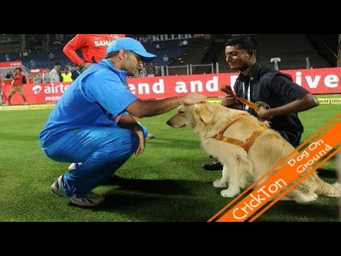 Cricket Funny Video | Dog on Cricket Ground | 2016 -  #dog #dogs #funnydogs #puppy #doglover #animals #animal #pet #cute #pets #animales #tagsforlikes Dog rules the cricket field in IPL like a boss……hahahaaahaaaa Watch our popular videos linked below…. IND vs BAN 23 March 2016 Bangladesh Wickets #T20 World Cup2016 :  Dhoni 183*... - #Dogs