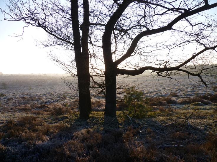 2013-01 Een mooie zondagmorgen in januari bij de Diepe Hel